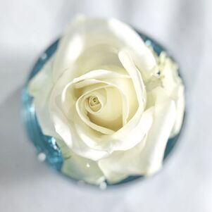 Picture white rose petals in a blue wedding table decoration